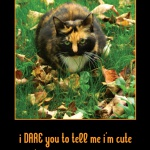 I DARE You Tortie Halloween Card
