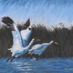 """Taking Flight"", pastel, 18.25"" x 12.25"", 2000 © Bernadette E. Kazmarski"