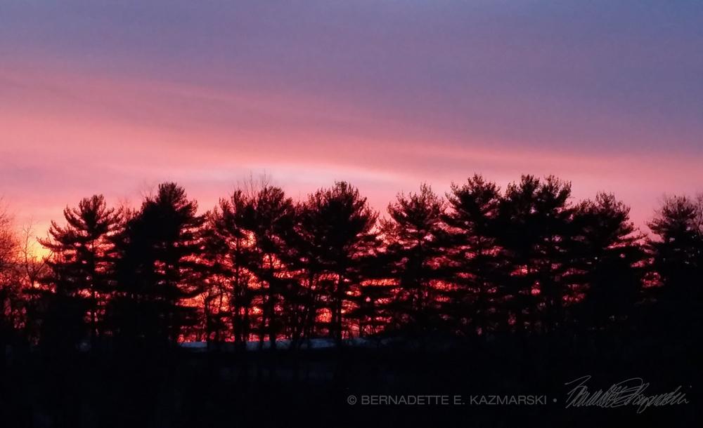 Through the Pines, Photo.