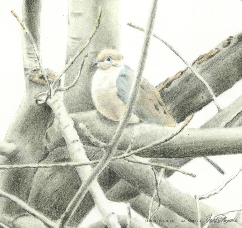 Biding Time, detail of dove and branches.