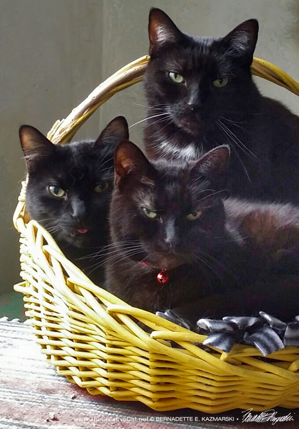 Three Seriously Cute Housepanthers in a Basket