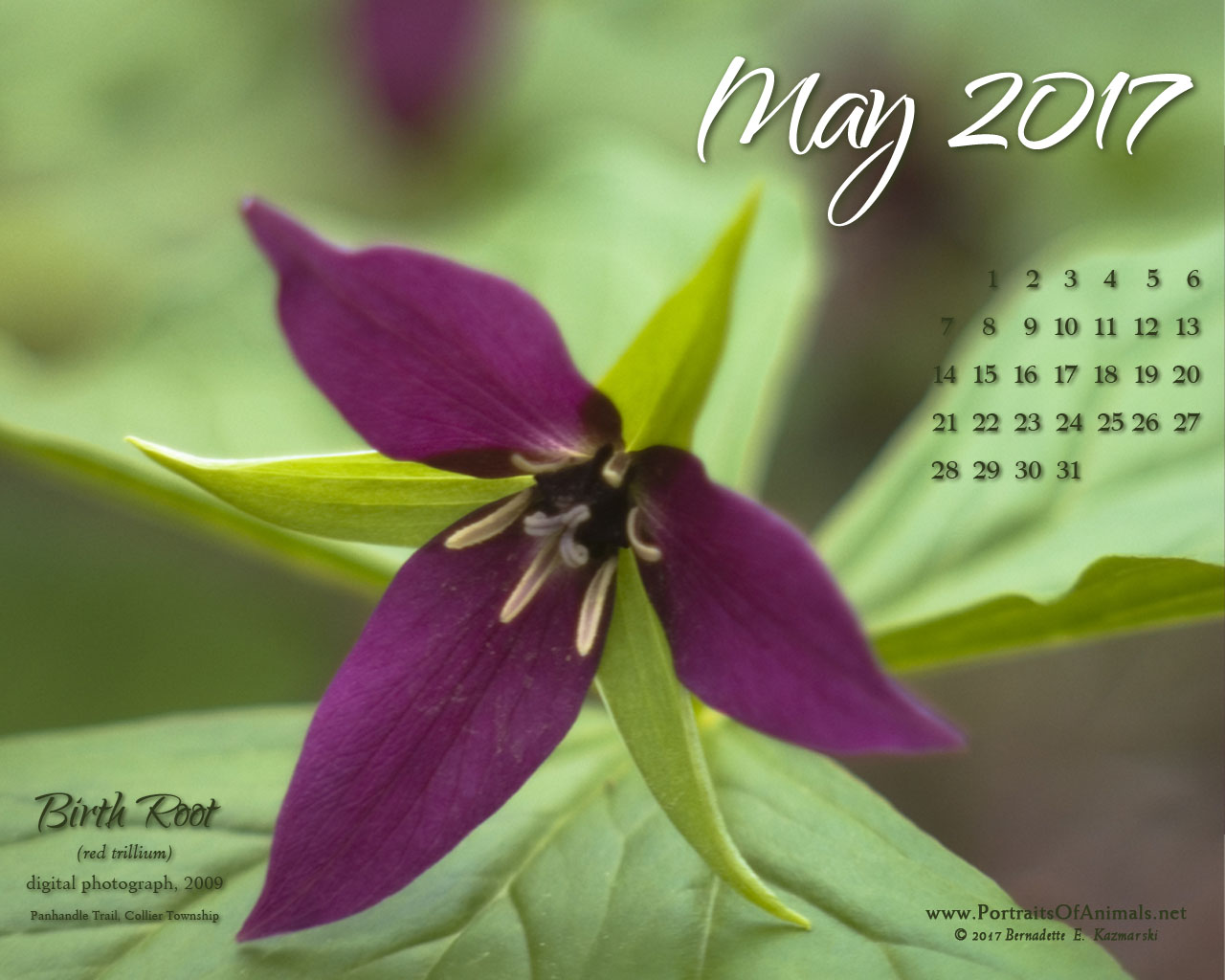May Nature Art Desktop Calendar Wallpaper