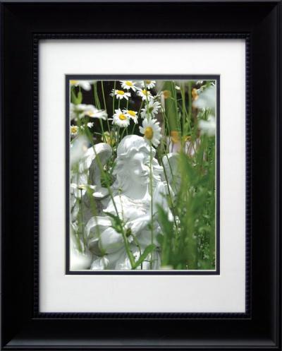 """Angel Daisies"", framed."