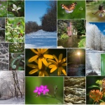 Photos for Seasons Along the Panhandle Trail
