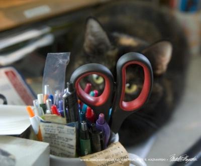 Sienna, Office Cat