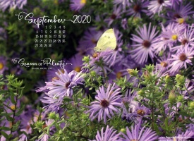 September Nature Desktop Calendar: Season of Plenty