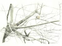 February Nature Desktop Calendar: Biding Time
