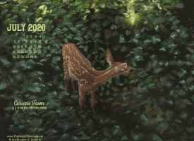 July Nature Desktop Calendar: Curious Fawn
