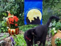 New Design: Only Good Luck Black Cats Garden Flag