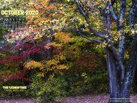 October Nature Desktop Calendar: The Lichen Tree