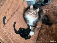 """""""Scratch Your Claws Here"""" Doormats, or Cat Mats"""