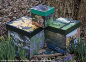 """Organize With Nature, """"Found Along the Panhandle Trail"""" Series Cube Keepsake Boxes"""